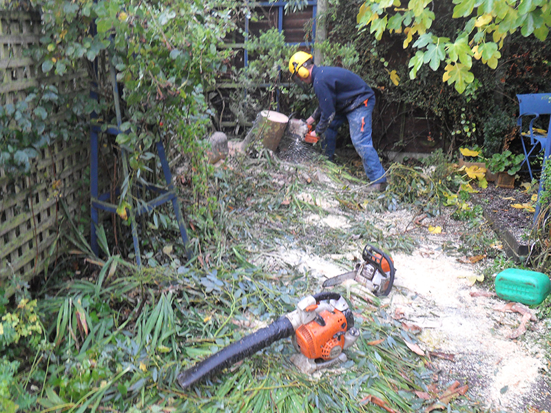Finishing the job, cutting down stump to ground level to be drilled and poisoned.